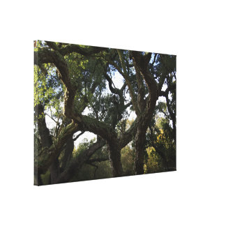 The leafy cork oak or tree of the mount cork canvas print