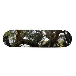 The leafy cork oak or tree of the mount cork skateboard