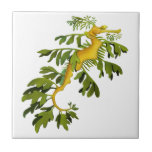"""The Leafy Sea Dragon Art Tile<br><div class=""""desc"""">Original fine art design of an ornate Leafy Sea Dragon by artist Carolyn McFann printed on a quality ceramic tile for seahorse fans.     See a few of our products below (click to go to that product) and visit our very artistic stores at:</div>"""