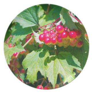 The leaves and unripe berries guelder viburnum opu dinner plate