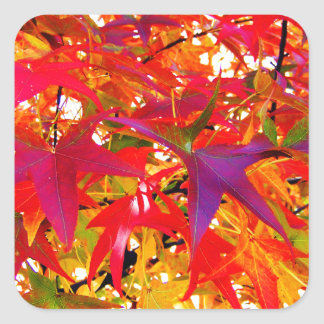 The Leaves of Fall Square Sticker