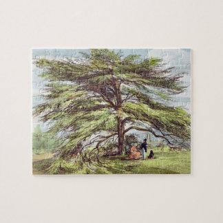 The Lebanon Cedar Tree in the Arboretum Kew Garde Puzzle