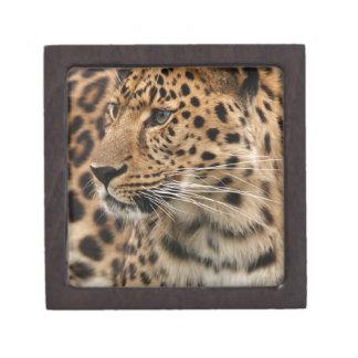The Leopard Keepsake Box