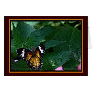 The Leopard Lacewing (Cethosia cyane): Butterfly Card