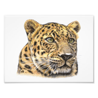 The leopard - The leopard Photo Print