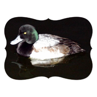 The Lesser Scaup In The Still Of The Night Card