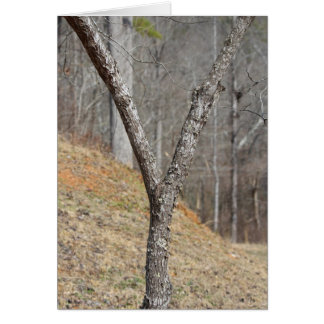The letter Y made by a tree Card