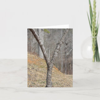 The letter Y made by a tree Note Card
