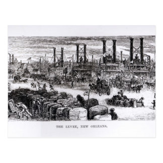 The Levee, New Orleans Postcard