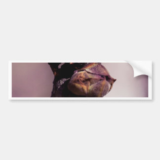 The Lilac Bud Bumper Sticker