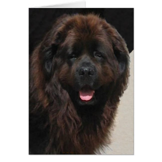 The Linderhof Newfie Greeting Cards