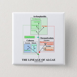 The Lineage Of Algae Button