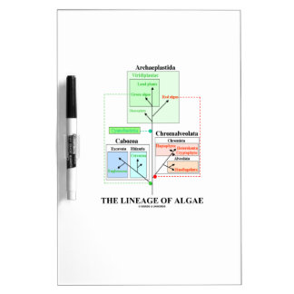 The Lineage Of Algae Evolutionary Biology Dry Erase Board