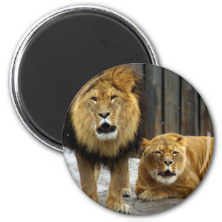 The Lion Duet Roaring at the Snow Flakes! Magnet
