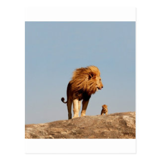 The Lion King ( Adult Lion and Cub) Postcard