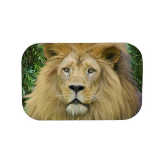 The Lion Lunch Box