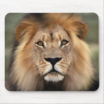 The Lion Mouse Pads