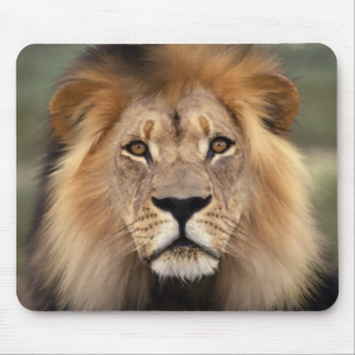 The Lion Mouse Pad
