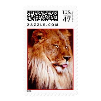 The Lion Sleeps Postage Stamp Sleeping Giant Cats