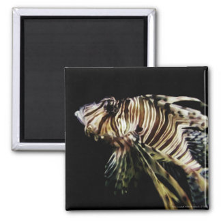 The Lionfish Magnet