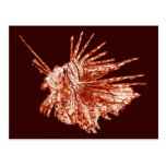 The Lionfish Post Card