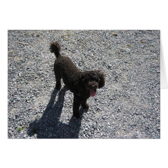 The Little Black Poodle Card