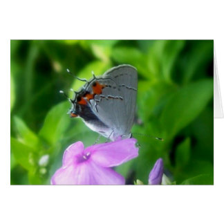 The Little Gray Butterfly Card