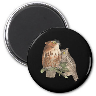 The Little Screech Owl	(Bubo asio) 2 Inch Round Magnet