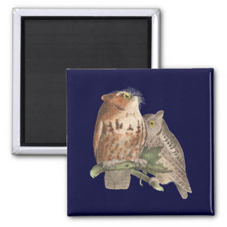 The Little Screech Owl	(Bubo asio) 2 Inch Square Magnet