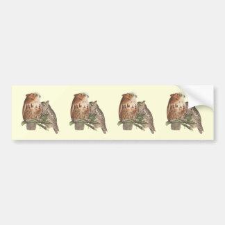 The Little Screech Owl(Bubo asio) Car Bumper Sticker