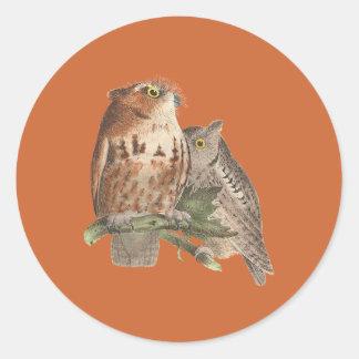 The Little Screech Owl(Bubo asio) Sticker