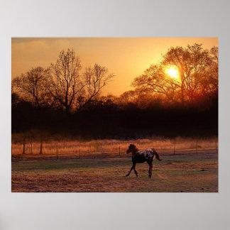 The Little Stallion At Sunset Poster