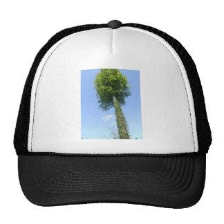 The Lollipop Tree Trucker Hat