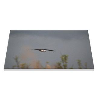 the lone flight canvas print