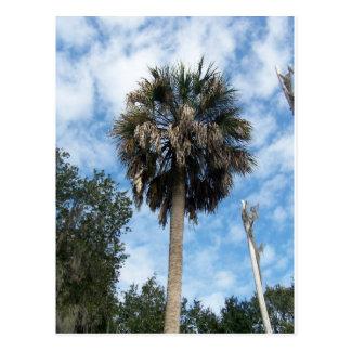 The Lone Palm Postcard