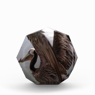 The Lone Pelican Acrylic Award