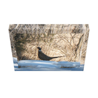 The Lone  Rooster Canvas Print