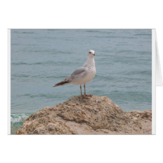 The Lone Seagull (2134) Greeting Card