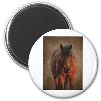 The Lone Stallion Magnet