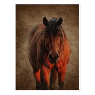 The Lone Stallion Postcard