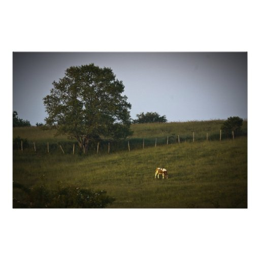 The Lonely Cow fine art print