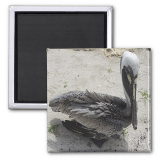 The Lonely Pelican Magnets