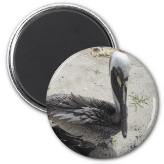 The Lonely Pelican Fridge Magnet