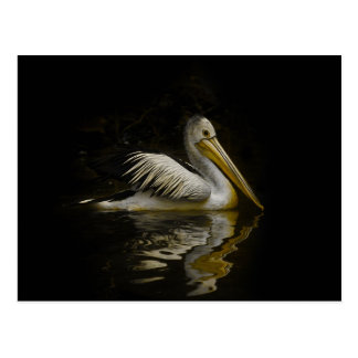 The Lonely Pelican Postcard
