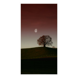 The lonely tree and the pale moon poster