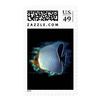 The Loner-Butterfly Fish Postage Stamp