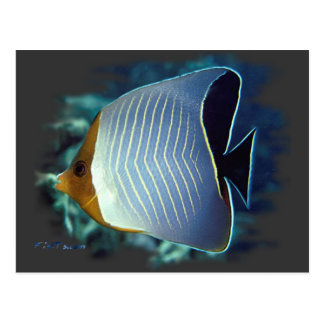 The Loner-Butterfly Fish Postcard