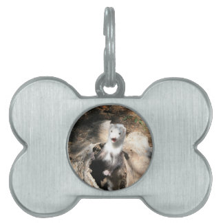The Lookout Pet Tag