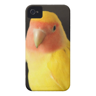 The Lovebird iPhone 4 Case