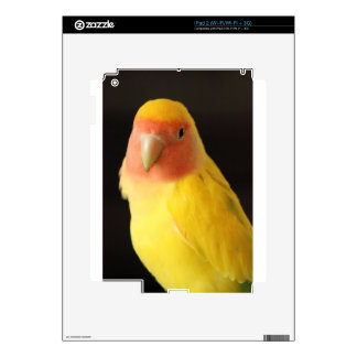 The Lovebird Skins For iPad 2
